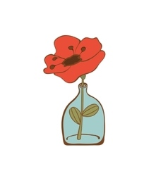Beautiful poppy flower in glass bottle vector image