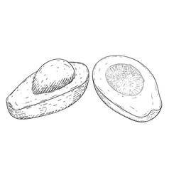 avocado hand drawn sketch vector image vector image