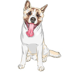 Dog American Akita breed laughs vector image vector image