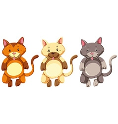 Three little kittens with silly face vector