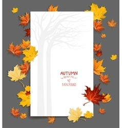 Blank with maple leaves vector image
