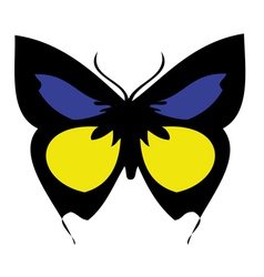 Colored butterfly vector image