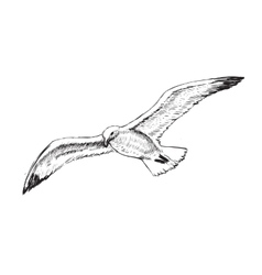 Flying Seagulls Hand Drawing vector image vector image