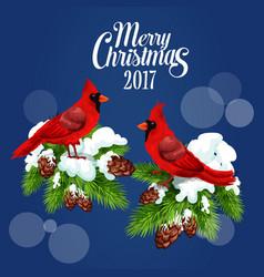 Merry Christmas greeting poster red bird cardinal vector image