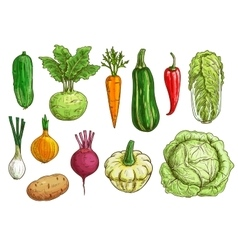 Vegetable isolated sketch set for food design vector image