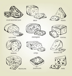 Graphic sketch of different cheeses icons vector