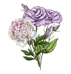 Hand drawn bouquet of eustoma and peony flowers vector