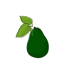 Avocado isolated on white vector