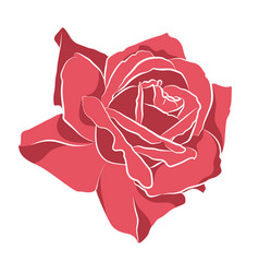 Beautiful hand drawn stencil rose isolated on vector