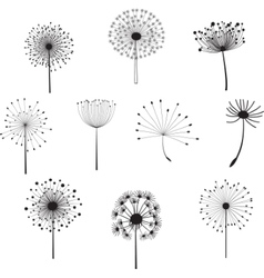 Floral elements with dandelions for design vector