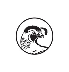 California valley quail circle black and white vector