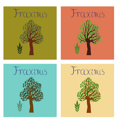 Assembly flat nature plant fraxinus vector