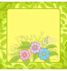 Flowers cosmos and frame vector