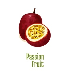 Passion fruit maracuya exotic isolated icon vector