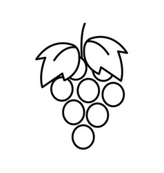 thin line grape icon vector image