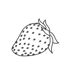 Strawberry fruit fresh food design line vector