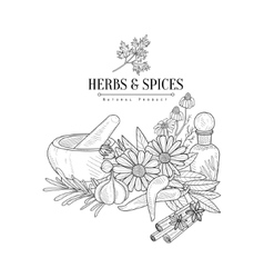 Herbs And Spices Hand Drawn Realistic Sketch vector image