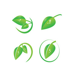 Green leaf with dew drops organic symbol set vector