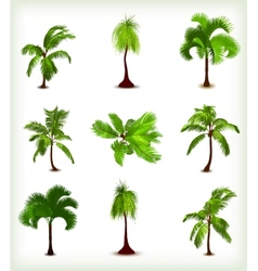 Set of various palm trees vector