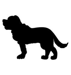 saint bernard dog vector image vector image