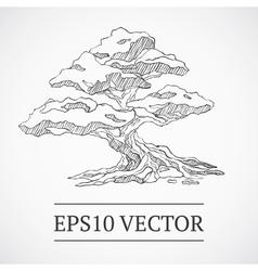 Sketched vintage bonsai tree vector
