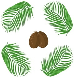 oconuts and palm leaves vector image