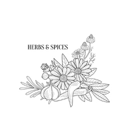 Herbs And Spices Bouquet Hand Drawn Realistic vector image vector image