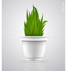Green sprout flower herb in the pot vector