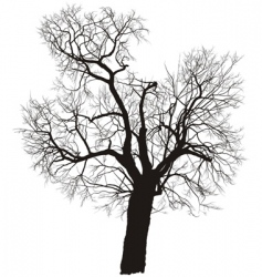 mulberry tree vector image
