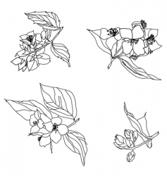 jasmine branches vector image