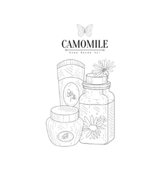 Camomile natural cosmetics hand drawn realistic vector