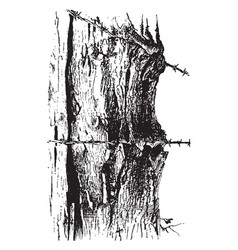 Fencepost cutting into a tree vintage vector