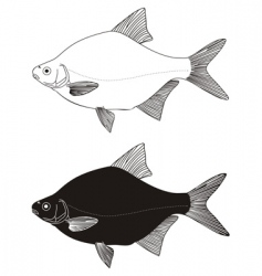 Freshwater fish bream vector