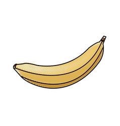 Draw banana fruit sweet vitamins food vector