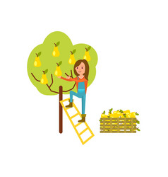 farmer harvest from tree icon vector image