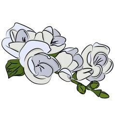 freesia flower vector image vector image