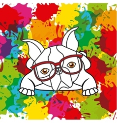 French bulldog and splash icon Pet and dog design vector image vector image