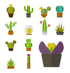 cactus nature desert flower green mexican vector image vector image