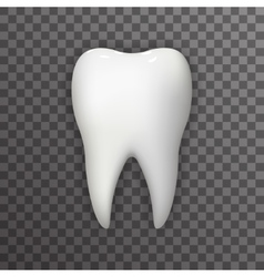 Realistic 3d Tooth Poster Transperent Stomatology vector image