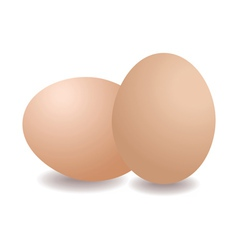 Two eggs vector image vector image