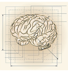 Brain map vector image vector image