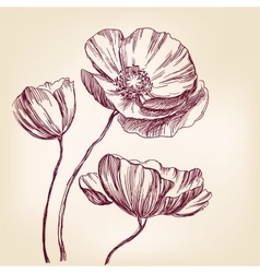 Poppies hand drawn llustration realistic vector