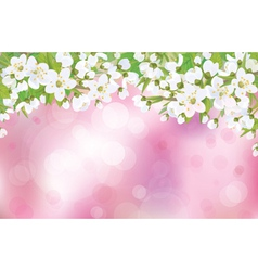 spring background blossom vector image