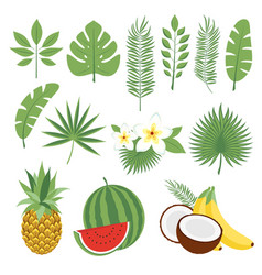 Set of cute tropical leaves and fruits palm vector
