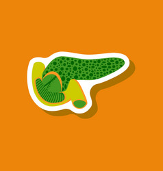Duodenum and pancreas paper sticker on stylish vector
