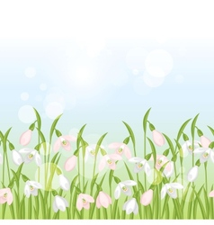 Spring flowers snowdrops seamless pattern vector