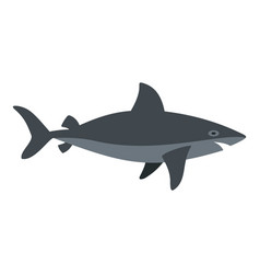 Grey shark fish icon isolated vector