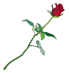 Red rose on a long stalk vector