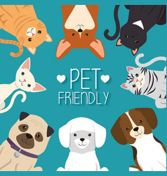 dogs and cats pets friendly vector image