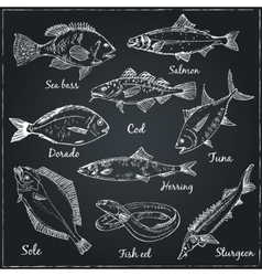 Fish collection veector vector